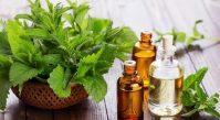 Эфирное масло мяты: свойства и методики применения
