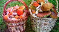 Полезные свойства грибов разных видов