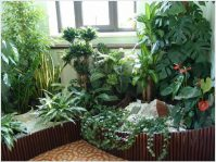 Какие комнатные растения полезны для здоровья