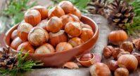 Фундук: свойства орехов и лечебные рецепты