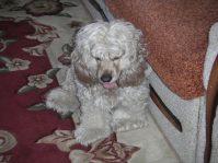 Собака в доме— все за и против